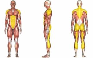mięśnie pracujące podczas ćwiczeń pajacyki
